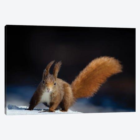 Dynamic Squirrel Canvas Print #OXM5899} by Hannes Bertsch Canvas Wall Art