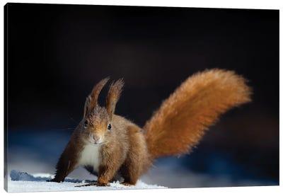 Dynamic Squirrel Canvas Art Print