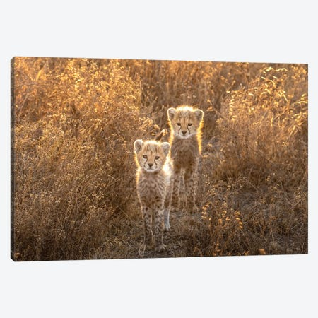 Two Little Cheetah Canvas Print #OXM5909} by Hung Tsui Canvas Art
