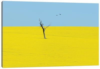 Canola Flowers Canvas Art Print