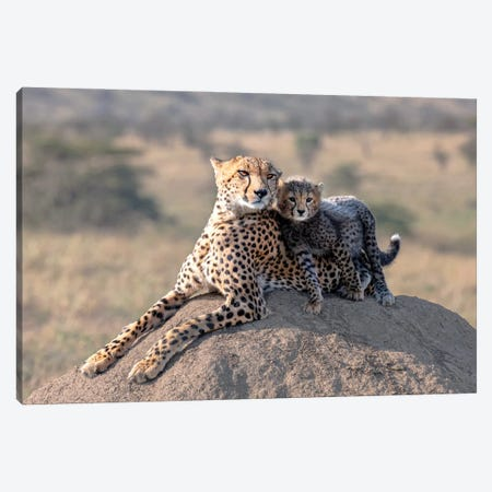 Cheetah And Cup! Canvas Print #OXM5940} by Jie Fischer Canvas Art