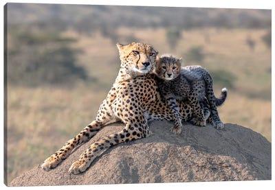 Cheetah And Cup! Canvas Art Print