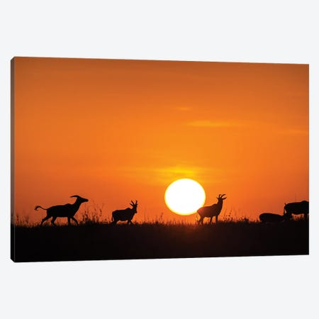 Running On The Sunset Canvas Print #OXM5944} by Jie Fischer Art Print