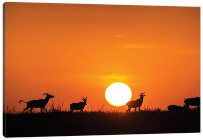 Running On The Sunset Canvas Art Print