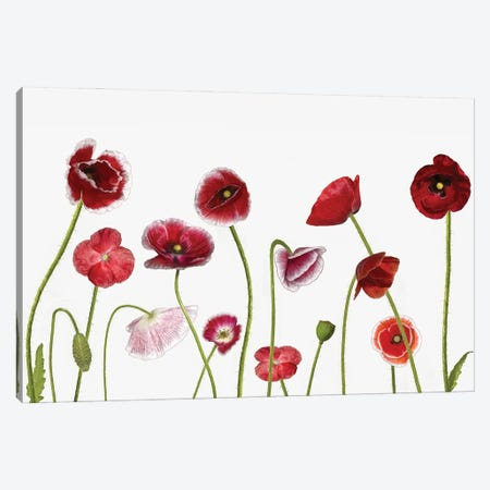 Poppy Family Canvas Print #OXM5947} by Jocelyn Manning Canvas Print
