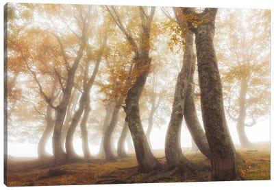 Between Mist And Light Canvas Art Print