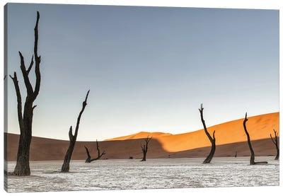 Namibian Desert Canvas Art Print