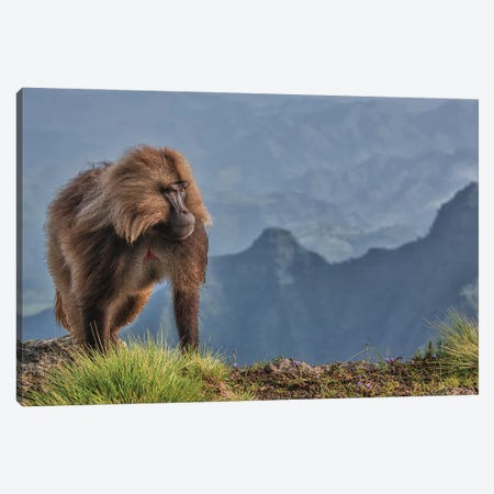 The Lion Monkey Canvas Print #OXM5992} by Luigi Ruoppolo Art Print