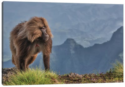 The Lion Monkey Canvas Art Print