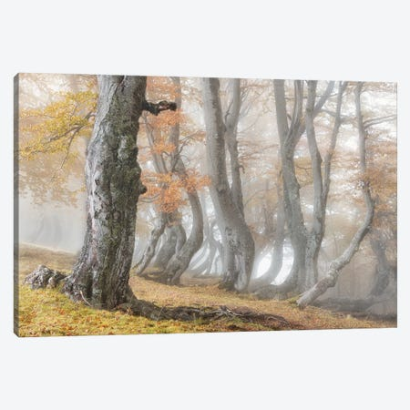 The Old Beech Tree Canvas Print #OXM5993} by Luigi Ruoppolo Canvas Print