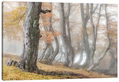 The Old Beech Tree Canvas Art Print