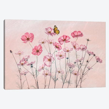 Cosmos And Butterfly Canvas Print #OXM5996} by Lydia Jacobs Canvas Wall Art
