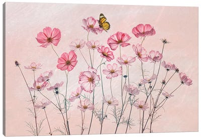 Cosmos And Butterfly Canvas Art Print