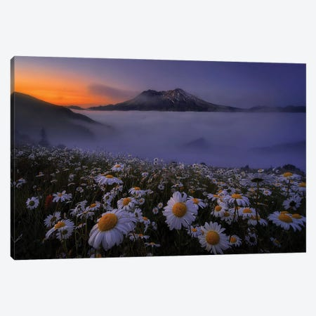 Morning Mist Canvas Print #OXM5997} by Lydia Jacobs Canvas Art