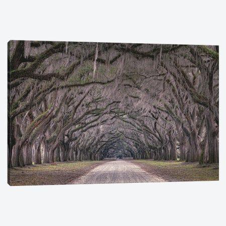 Oaks Avenue Canvas Print #OXM6003} by Marco Tagliarino Canvas Art Print