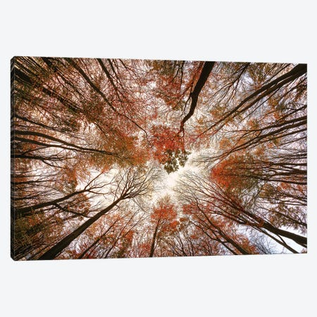 Autumn Trees Canvas Print #OXM6009} by Michael Art Print