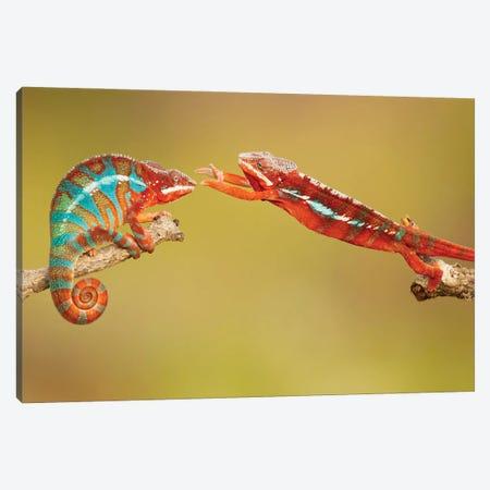 Panther Chameleons Canvas Print #OXM6030} by Milan Zygmunt Canvas Artwork