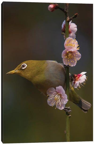 Plum Blossoms And White-Eye Canvas Art Print
