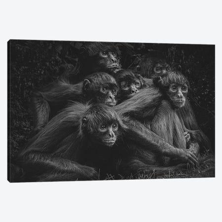 Spider Monkeys VI Canvas Print #OXM6057} by Paul Gomez Canvas Art Print
