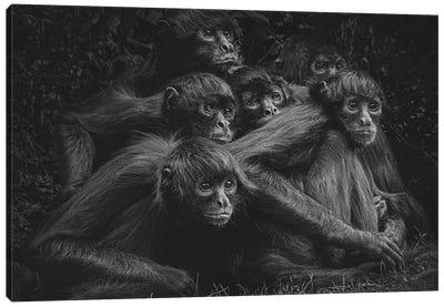 Spider Monkeys VI Canvas Art Print