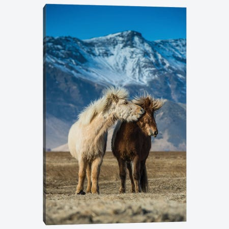 The Beautiful Horses During Courtships Canvas Print #OXM6061} by Petr Simon Canvas Print