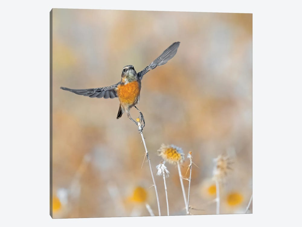 Stonechat Taking Off by Raad Btoush 1-piece Canvas Art