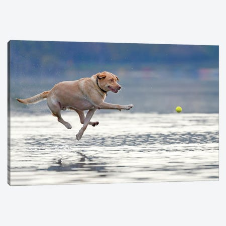 Dance Above The Water Canvas Print #OXM6073} by Rob Li Canvas Wall Art