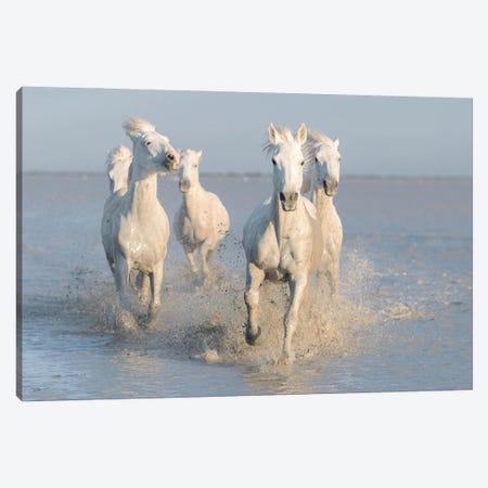 Horses Canvas Print #OXM6080} by Rostovskiy Anton Canvas Print