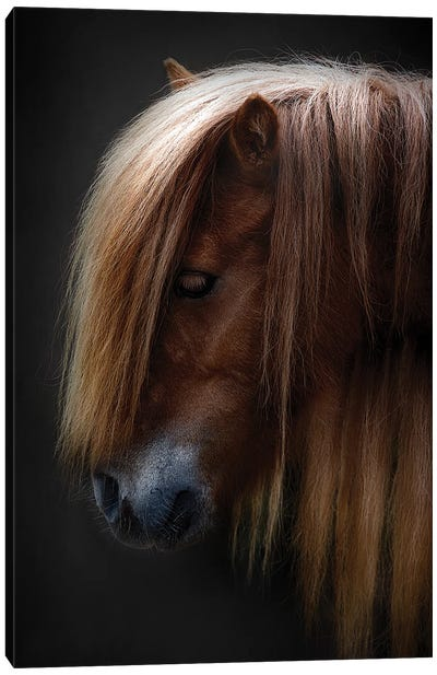 Pony Shetland Portrait Canvas Art Print