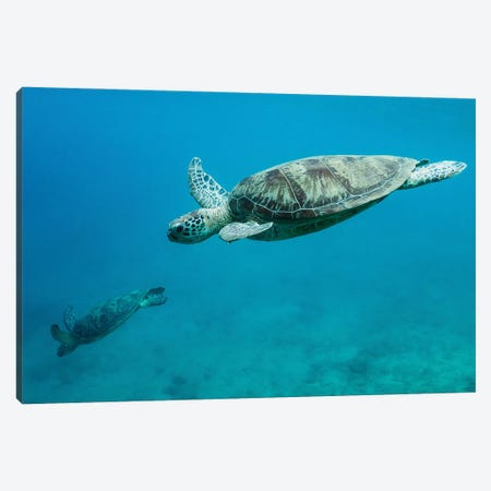 Dive Canvas Print #OXM6095} by Serge Melesan Canvas Print