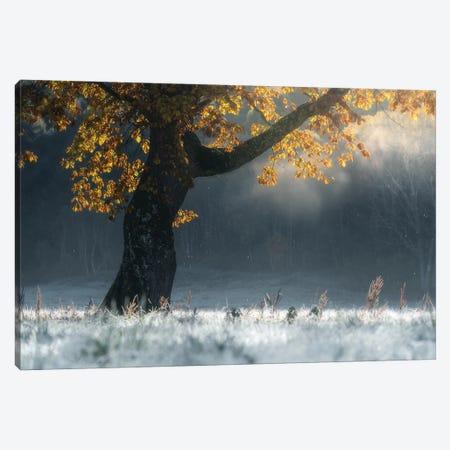 Morning Breath Canvas Print #OXM6115} by Suntararak Saowanee Canvas Artwork