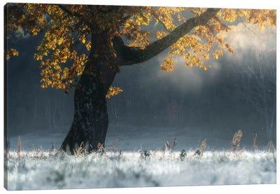 Morning Breath Canvas Art Print