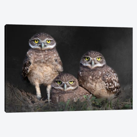 Three Is Company Canvas Print #OXM6116} by Susan Beausang Canvas Wall Art