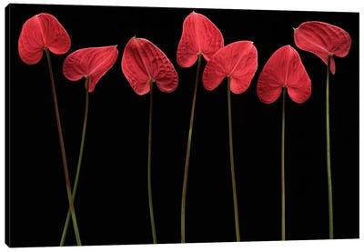 Botanical Hearts Canvas Print #OXM613