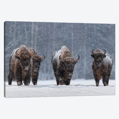 Let It Snow.. Canvas Print #OXM6147} by Vlad Sokolovsky Canvas Print