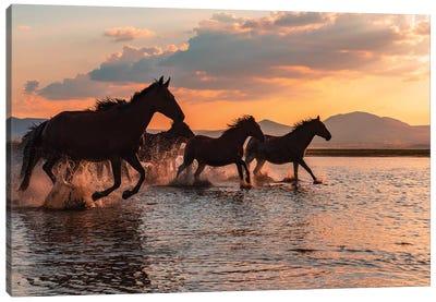 Water Horses Canvas Art Print