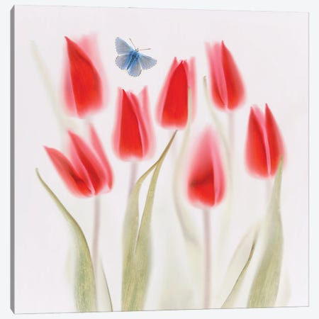 Red Tulips Canvas Print #OXM6241} by Brian Haslam Canvas Print