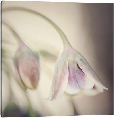 Soft Shades Of Pink Canvas Art Print