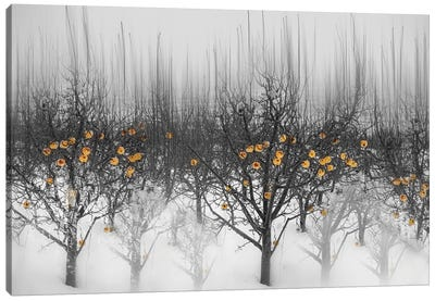 Frozen Yellow Apples Canvas Art Print