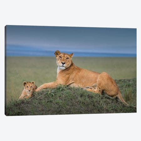 Rest With Cub Canvas Print #OXM6284} by Jie Fischer Canvas Art