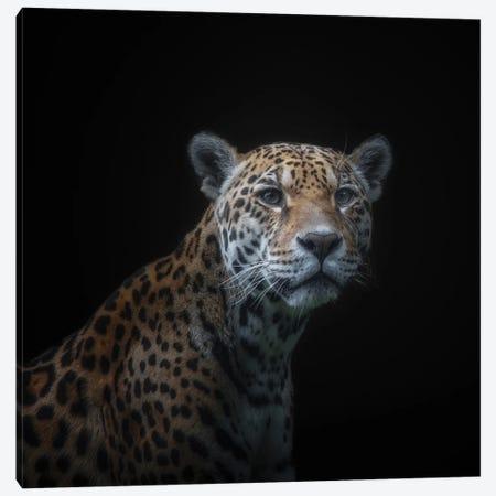 Jaguar Canvas Print #OXM6297} by Kamera Canvas Art Print