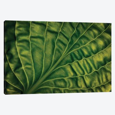 Leaf Of A Hosta Canvas Print #OXM6312} by Lotte Gronkjar Art Print