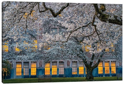 Morning At University Of Washington Canvas Art Print