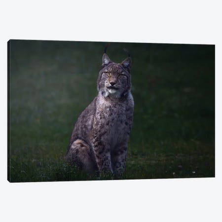 Fine Art Lynx Canvas Print #OXM6371} by Sergio Saavedra Ruiz Art Print
