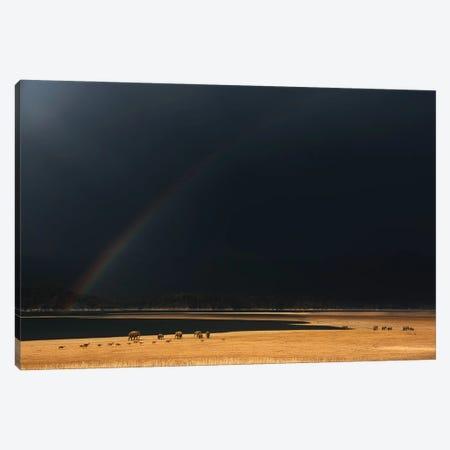 Grasslands Canvas Print #OXM6377} by Swapnil Canvas Wall Art