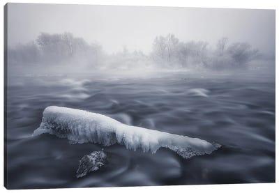 Frozen Trunk Canvas Art Print