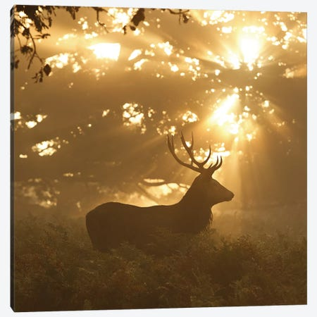 Ghost Of The Forest Canvas Print #OXM640} by Greg Morgan Canvas Art