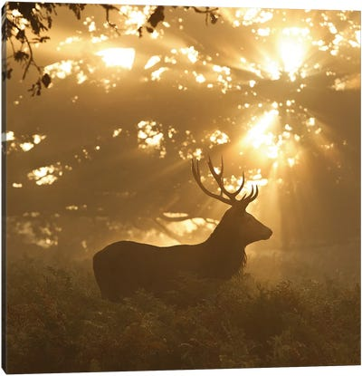 Ghost Of The Forest Canvas Art Print