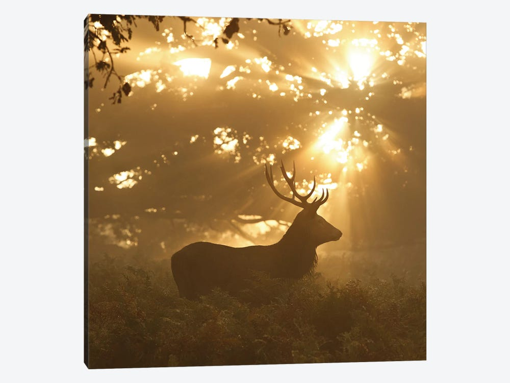 Ghost Of The Forest by Greg Morgan 1-piece Canvas Print