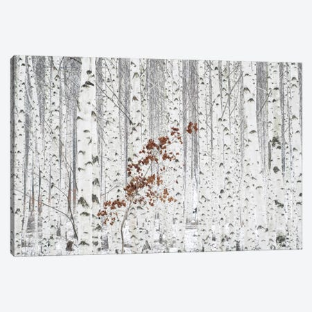 From White Canvas Print #OXM648} by Han Donghee Canvas Wall Art